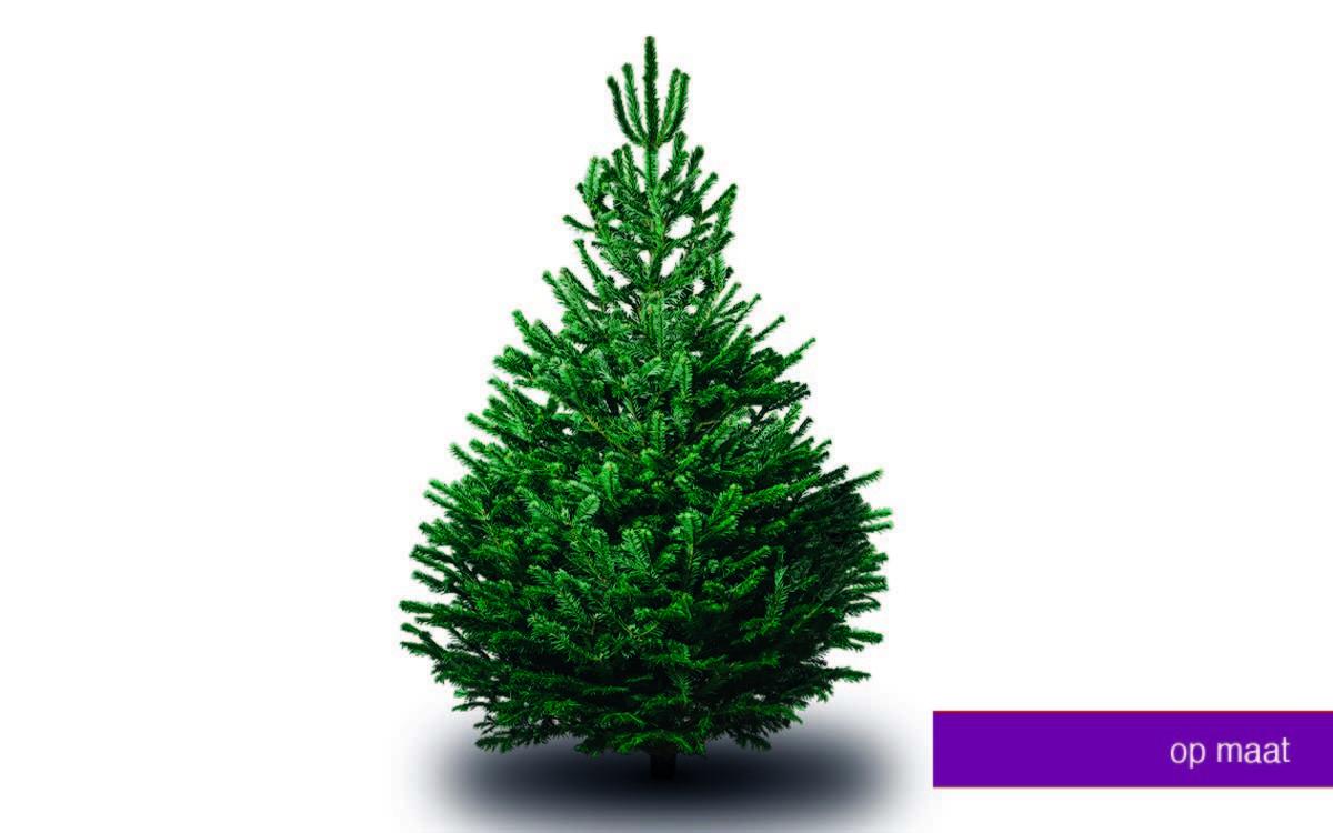 nordmann kerstboom 2020 Nordmann kerstboom Op Maat   Onder een Boom